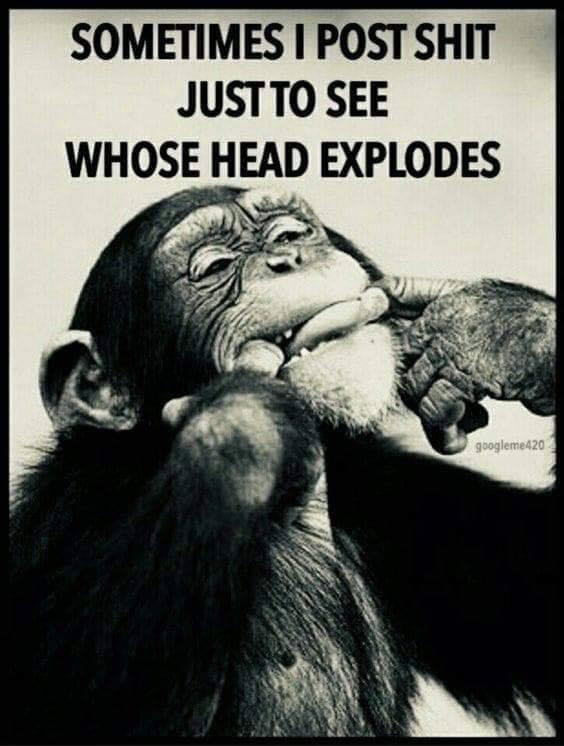 Monkey Meme.jpg