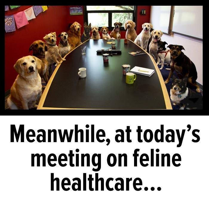 feline healthcare.jpg