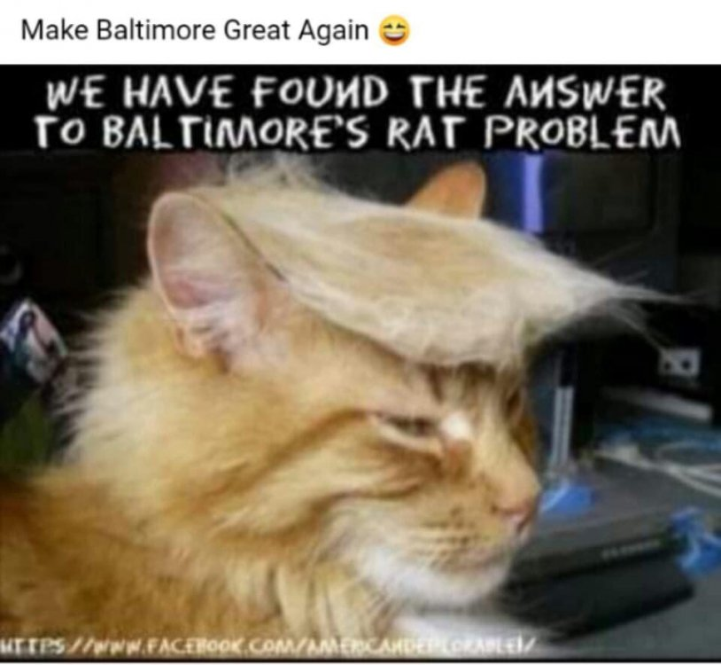 Trump Cat.jpg